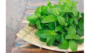 Mint Benefits: 10 Incredible Health Benefits Of Mint Or Pudina